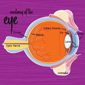 Anatomy of the Eye - Diagram